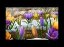 Песня Перекрашу на Весну Зиму