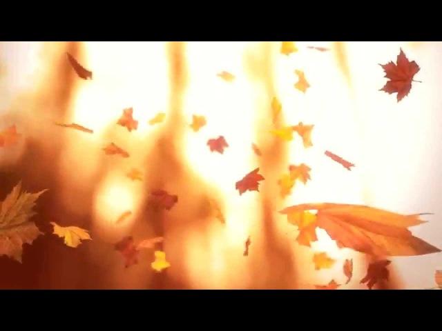 Падающие осенние листья Falling leaves