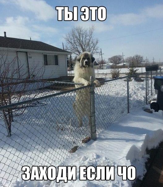 Адвокаты Савченко будут ходатайствовать о переносе заседания по делу летчицы в Москву - Цензор.НЕТ 6058