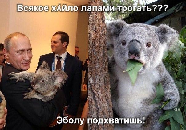 В России уничтожили 30 тонн польских грибов - Цензор.НЕТ 900