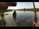 Рыбалка на карася поплавочной удочкой от Михалыча