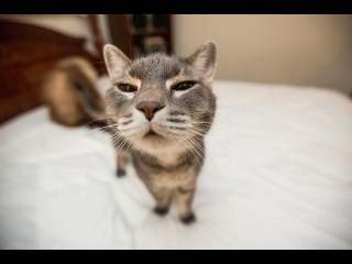 Годовая подборка видео про котиков 2015 😃