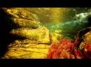 Caño Cristales: El Rio Más Hermoso del Mundo - Colombia HD