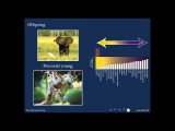 BAHFest West 2014 - Sarah Hird Why do Mammals Sleep