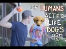 If Humans Acted Like Dogs