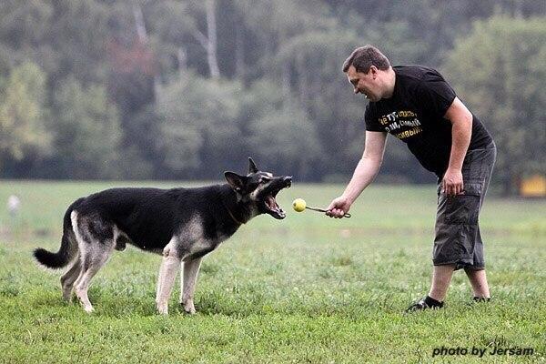 Это надо знать! ИНТЕРЕСНЫЕ факты о собаках 3IXAC-VCjq4