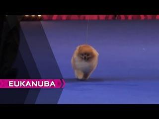 European Dog Show 2014 | Day 4