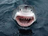Анатомия укуса акулы