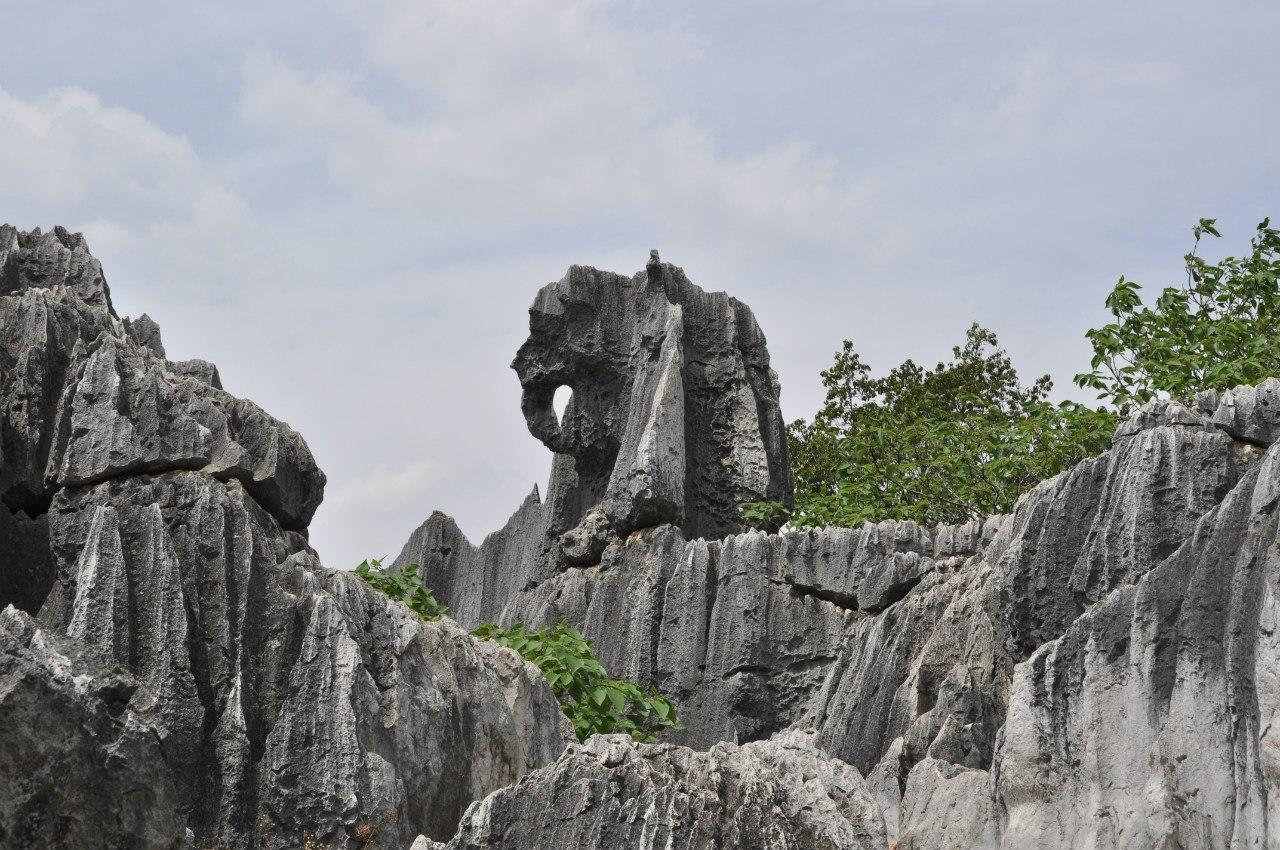 Слон, например...