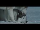Белый плен (2005) [HD]
