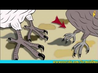 Почему стриж не садится на землю? (развлекательные мультфильмы Формула Ума!)