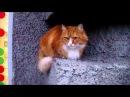 Серьёзный питерский кот