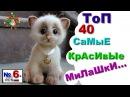 САМЫЕ КРАСИВЫЕ.Коты котята кошки В МИРЕ.2015 г Смешно до слез,№6