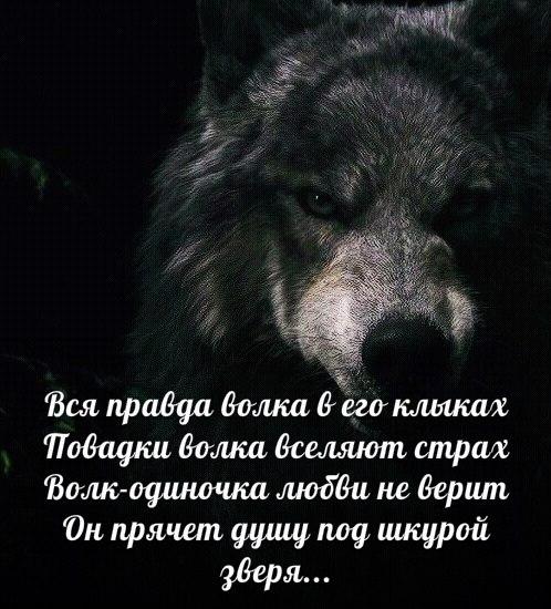 Пересылки открытки, картинка волка с надписью никогда не проигрываю