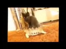 смешно видео про кошек прикольная нарезка