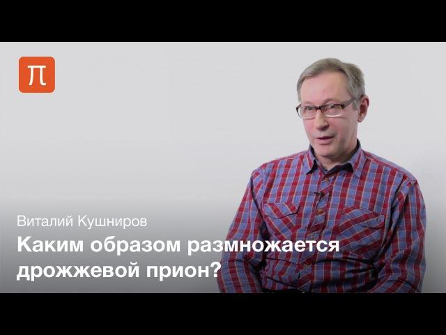 Прионы дрожжей — Виталий Кушниров