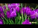 დამჭკნარი იები (საუკეთესო ვერსია) / Damchknari iebi (HD)