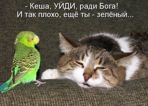 Картинки про любовь на аву vk