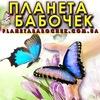 Планета бабочек