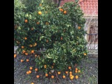Оранжевый цвет всегда вызывает позитивные эмоции)) Где-то читала, не помню где, что именно для женщин полезны оранжевые фрукты! Кто-нибудь слышал про это?
