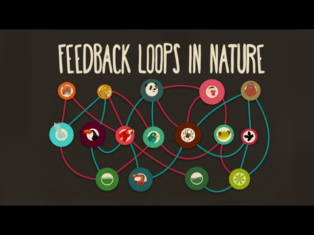 Feedback loops How nature gets its rhythms - Anje-Margriet Neutel