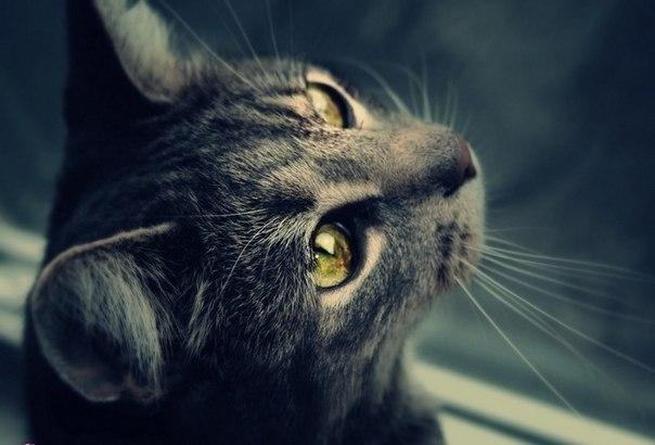Охота - CatWar вики - Wikia