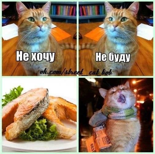 Уличный кот по имени боб мир глазами