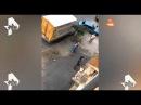 Бесстрашная хозяйка лабрадора защитила своего пса, избив питбуля лопатой