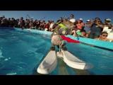 Белка на водных лыжах.