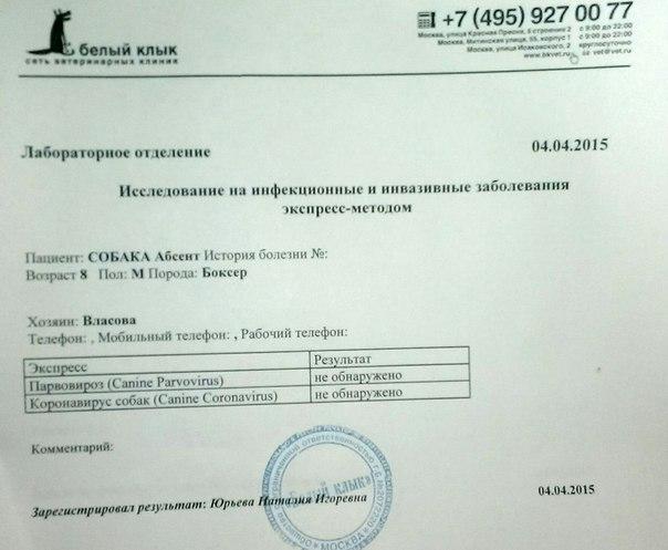 Москва. Абсент, кобель, 08.07.2005 г.  O_tUAqSqJ1Q