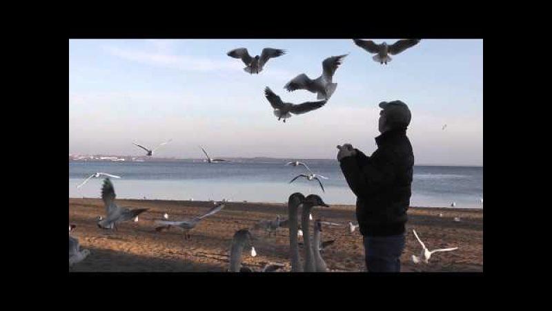 Gulls feeding in slow motion - Möwen füttern