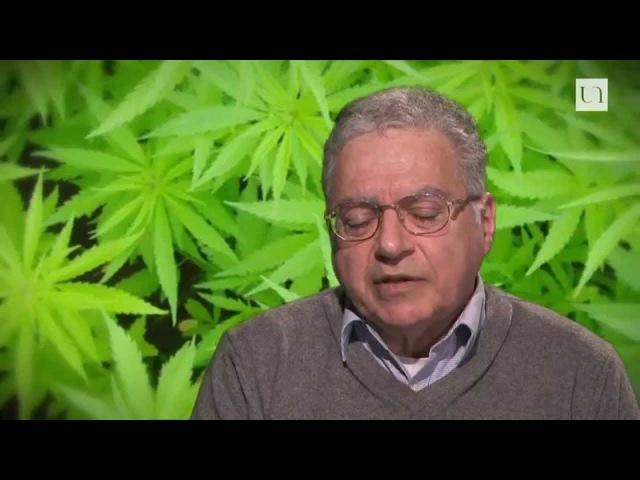 Légalisation du Cannabis : Aujourd'hui le Colorado, demain la France.