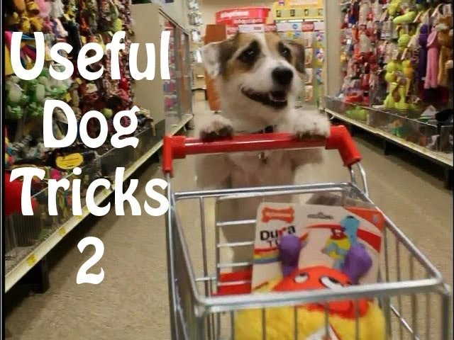 Useful Dog Tricks 2 performed by Jesse the Jack Russell Terrier
