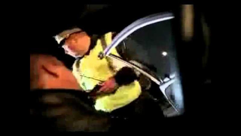 съемка с телефона Нападение стаи волков на пост ДПС трасса М23