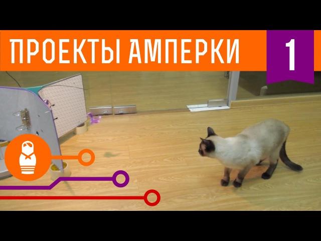 Фотобудка для кота. Проекты Амперки 1