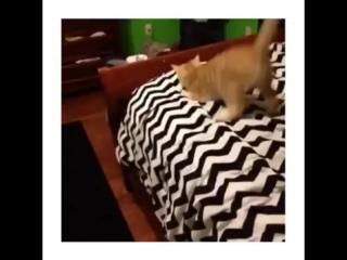 То чувство, когда кот танцует тверк лучше тебя