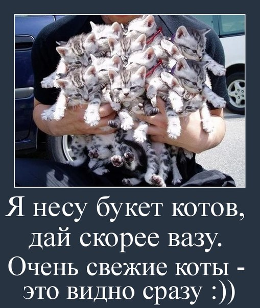 http://cs623416.vk.me/v623416844/28f01/T9b8yG704hk.jpg
