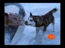 Dog breed in movie eight below