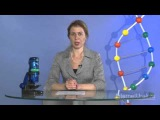 Биосинтез белков в живой клетке | урок 11, биология 9 класс