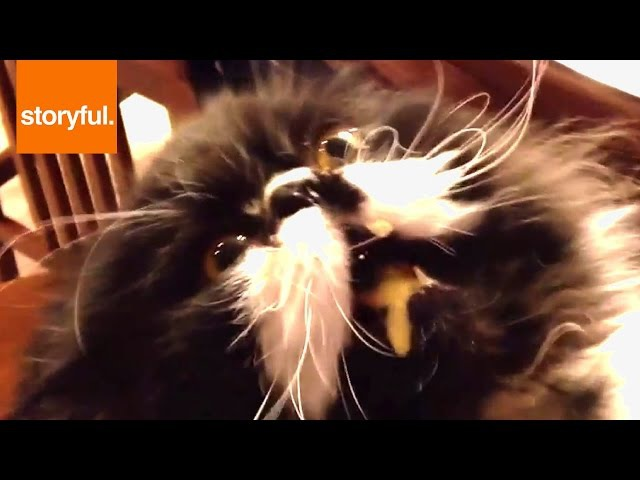 Cat Licks Ice Cream And Gets Brain Freeze (Storyful, Cats)