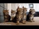 Funny Cats Choir Dancing Chorus Line of Cute Kittens