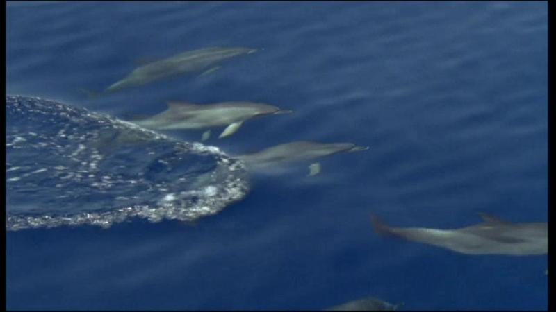 BBC. Голубая планета. (3) Открытый океан