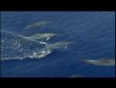 BBC Голубая планета 3 Открытый океан