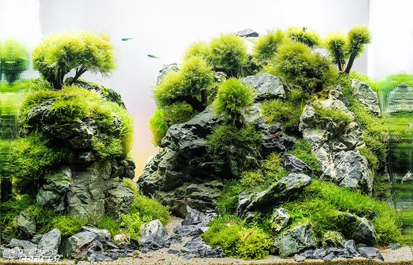 Конкурс аквариумного дизайна DENNERLE Scaper's Tank 2014 I_56llIdXGo