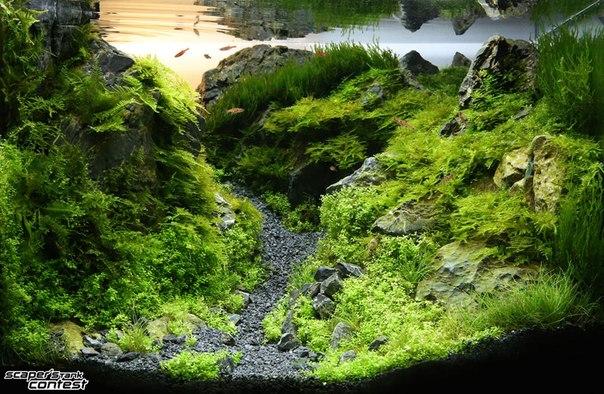 Конкурс аквариумного дизайна DENNERLE Scaper's Tank 2014 KrmJZkpsc0c
