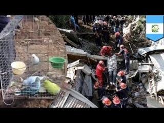 Люди погибли, а птицы в клетках выжили в результате наводнения в Гватемале
