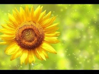 БГ+Аквариум - Фикус религиозный (клип 2014) HD