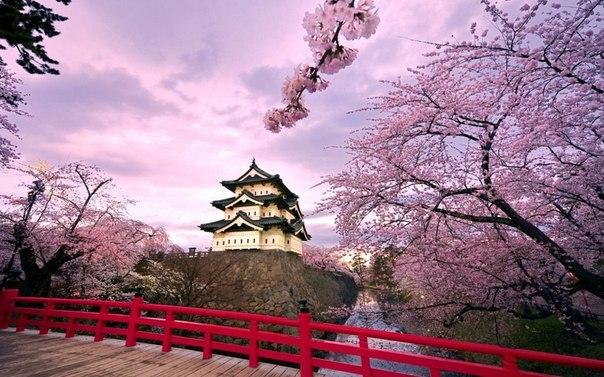 В Японии зацветает сакура  Конец марта
