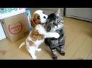 Дружба кошек и собак. Трогательное видео дружбы и милые приколы с кошками и собаками