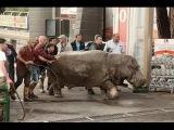 Мощное наводнение в Тбилиси: 8 человек погибло, зоопарк разрушен, животных отстреливают на улицах